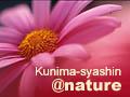 kunima-syashin@nature